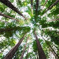 Trồng đủ 1000 tỷ cây xanh, chúng ta sẽ ngăn được biến đổi khí hậu