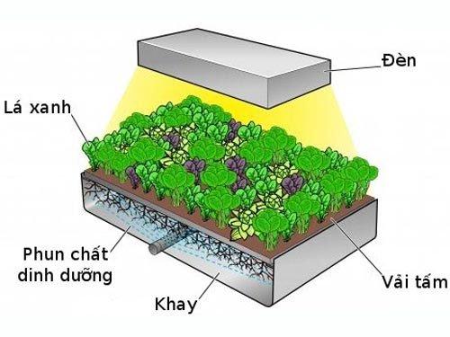 Trồng rau không cần đất