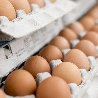Trứng không phải