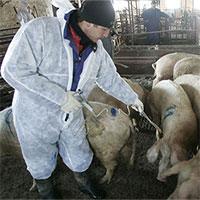 Trung Quốc có cách hay dùng điện trường ngăn dịch tả lợn châu Phi