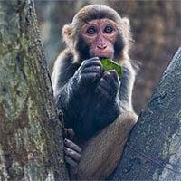 Trung Quốc ghi nhận ca tử vong đầu tiên do virus Monkey B