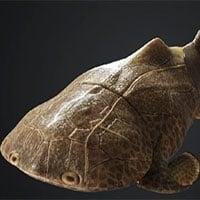 Trung Quốc phát hiện dấu tích loài cá da cứng như áo giáp, có