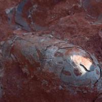Trung Quốc: Phát hiện trứng khủng long 130 năm triệu năm vẫn còn nguyên vẹn