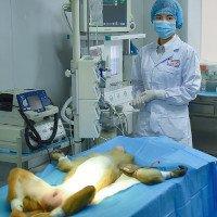Trung Quốc phát triển máy in 3D sinh học có thể sản xuất mô người