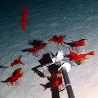 Trung Quốc: Thả camera xuống biển, phát hiện hàng chục sinh vật kỳ dị