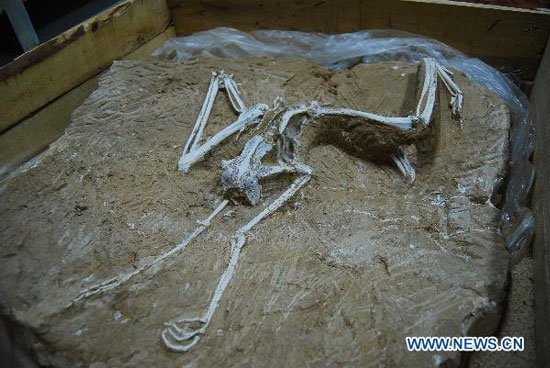 Trung Quốc tìm ra hóa thạch chim 7 triệu năm tuổi