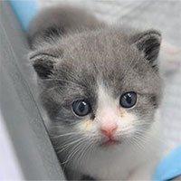 Trung Quốc tuyên bố nhân bản vô tính thành công con mèo đầu tiên