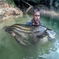 Truy tìm quái ngư huyền thoại trong rừng mưa Malaysia