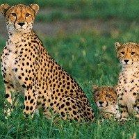Tuổi thọ của các loài động vật trong tự nhiên