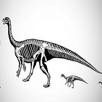 Tương tự con người, một số loài khủng long ban đầu cũng bò rồi mới chuyển sang đi bằng 2 chân