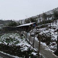 Tuyết rơi dày tại thác Bạc, Ô Quí Hồ (Sa Pa)