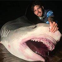 Úc: Cá mập hổ khổng lồ dài 5 mét bị ngư dân khuất phục