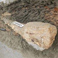 Vách đá xói mòn để lộhóa thạch 15 triệu năm tuổi