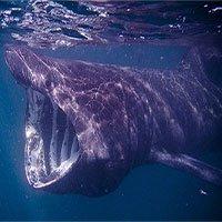 Vệ tinh bám đuôi cá nhám phơi nắng bí ẩn