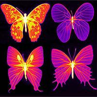 Vì sao ánh nắng không thể đốt cháy cánh bướm?