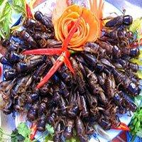 Vì sao các món từ côn trùng ngon nhưng nguy hiểm?