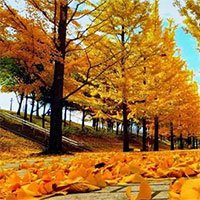 Vì sao cây rụng lá vào mùa thu?