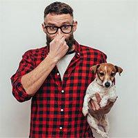 Vì sao chó thường bốc mùi khi lông bị ướt?