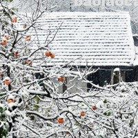 Vì sao khí hậu ấm lên mà mùa đông lại