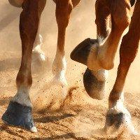 Vì sao móng guốc ngựa chỉ có một ngón?