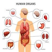 Vì sao một số bộ phận trong cơ thể tái sinh được còn một số khác thì không?