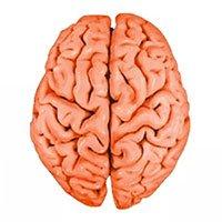 Vì sao não người lại