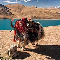 Vì sao người nước ngoài tới Tây Tạng du lịch nườm nượp nhưng ít ai dám ở lại quá lâu?