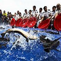 Vì sao sau khi xây xong đập Tam Hiệp, Trung Quốc phải thả vào 10.000 con cá?