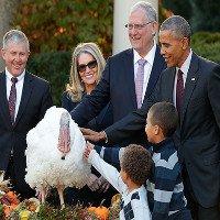 Vì sao Tổng thống Mỹ lại phải ân xá cho gà tây?