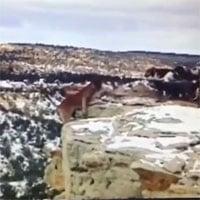 Video: Bị đàn chó săn dồn vào đường cùng, báo sư tử ngã xuống vực sâu