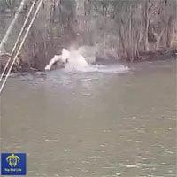 Video: Cá mập đi vào lãnh địa cá sấu kiếm ăn và kết cục