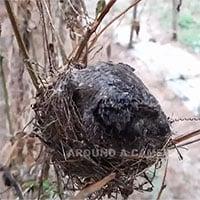 Video: Cảm động cảnh chim mẹ ướt sũng toàn thân vì mưa vẫn không để chim con bị lạnh