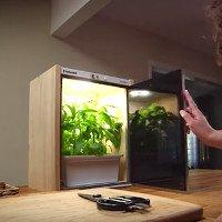Video: Chiếc tủ mini trồng rau không cần chăm bón