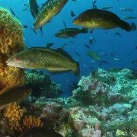 Video: Chile tạo ra công viên biển lớn bằng một quốc gia