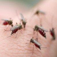 Video: Dấu hiệu cho thấy bạn bị sốt xuất huyết