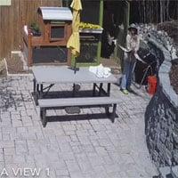 Video: Diều hâu sà xuống tấn công gà lông lụa thì bị cô chủ nhà tóm gọn, số phận nó sẽ đi về đâu?