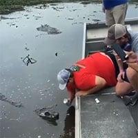 Video gây choáng váng: Người đàn ông liều lĩnh dùng miệng cá sấu mở lon bia