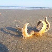 Video: Hàng trăm chân ống giúp sao biển đi bộ trên đất liền