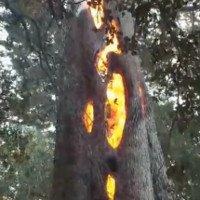 Video: Hiện tượng cây bốc cháy từ bên trong ở Mỹ