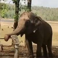 Video: Học lỏm người dân, voi bơm nước từ giếng lên uống
