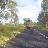 Video: Kangaroo bay lên không, đá văng người phụ nữ đi xe đạp