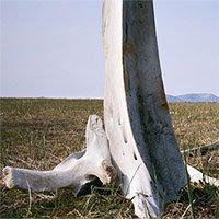 Video: Khám phá thung lũng xương cá voi bí ẩn ở Siberia