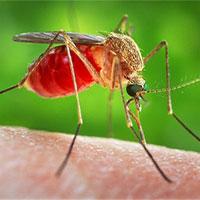 Video: Rợn tóc gáy về cú hút máu của muỗi