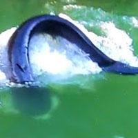 Video: Thả câu trong hồ nước xanh, người đàn ông kinh ngạc khi kéo lên