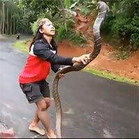 Video: Thất kinh cảnh cô gái tay không tóm gọn rắn hổ mang chúa khổng lồ