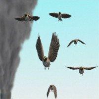 Video: Theo dõi ô nhiễm nhờ muội than trên xác chim trăm tuổi