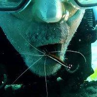 Video: Thợ lặn há mồm để tôm biển dọn sạch thức ăn bám trên răng