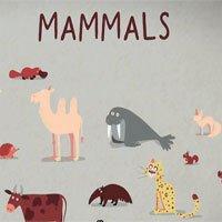 Video: Tìm hiểu về ba kiểu sinh sản ở các loài động vật