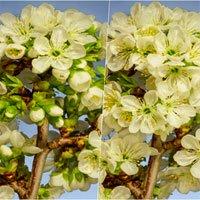 Video timelapse các loài hoa đua nở được tạo từ hơn 39.000 bức ảnh