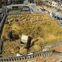 Video: Trải nghiệm trồng lúa, nuôi ong trên mái nhà ở Nhật
